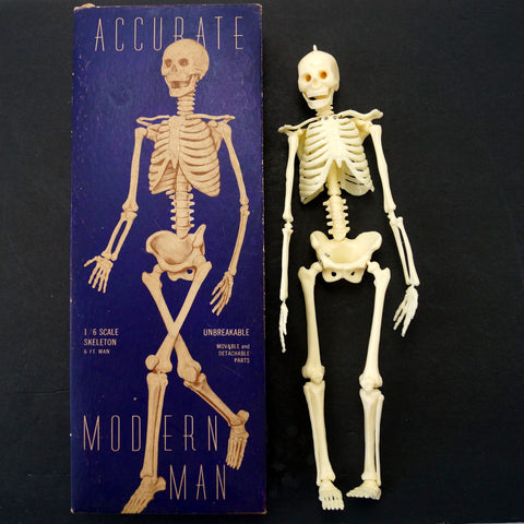 Vintage Human Skeleton Anatomy Model in Original Box, 1/6 scale Modern Man (c.1958) - thirdshift
