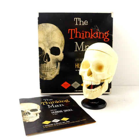 Vintage Human Skull Anatomy Model with Manual, Life Size (c1960s) - ThirdShiftVintage.com