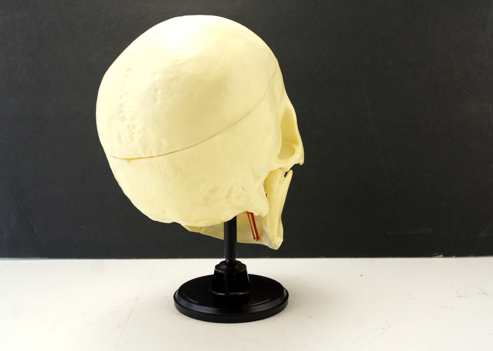 Vintage Human Skull Anatomy Model With Manual Life Size C1960s