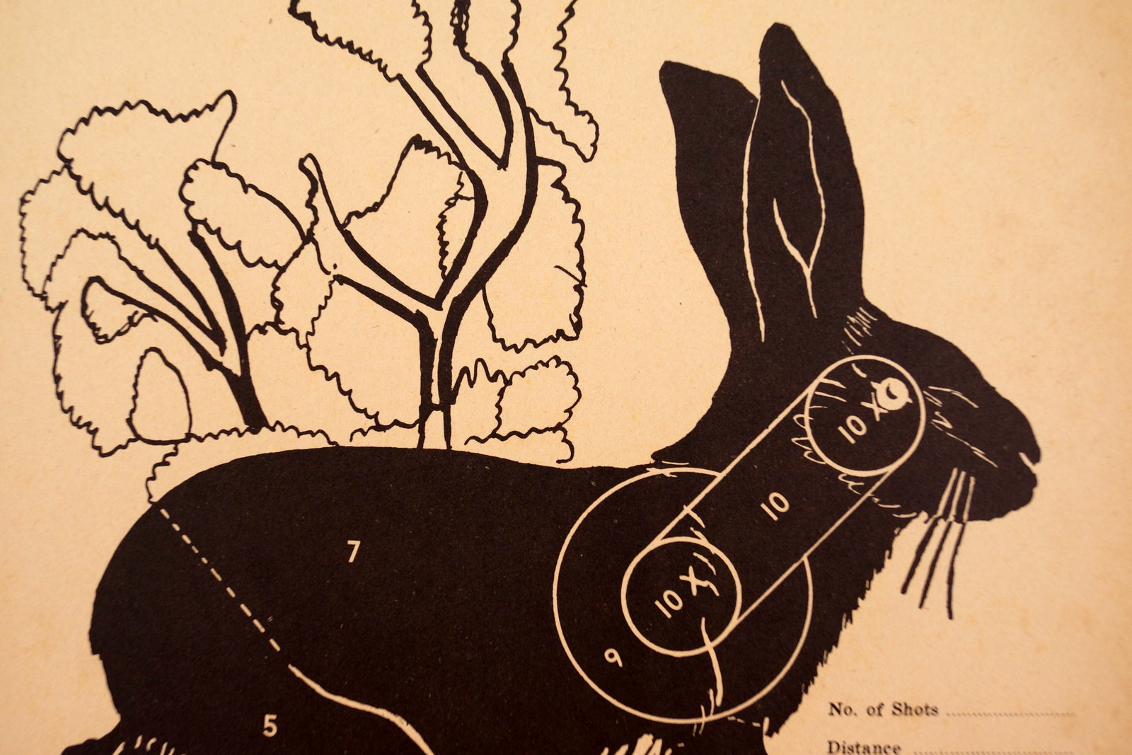 Vintage Winchester Jack Rabbit Shooting Target, 12 x 9 inches (c ...