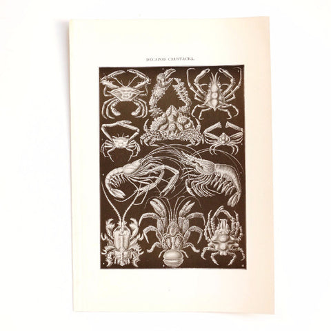 Vintage / Antique Decapod Crustacea Book Plate Engraving in Black and White, N1 (c.1900s) - ThirdShiftVintage.com