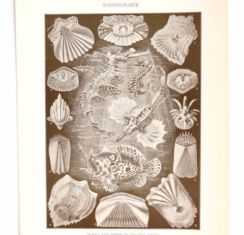 Vintage / Antique Ichthyology Book Plate Engraving in Black and White (c.1900s) N2 - ThirdShiftVintage.com