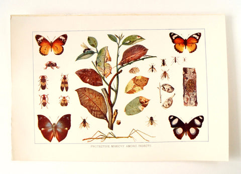 Vintage / Antique Insects Book Plate Engraving 1 (c.1900s) - Collectible, Home Decor - ThirdShift Vintage