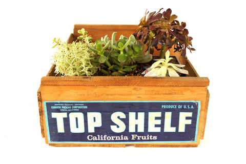 "Vintage ""Top Shelf"" Fruit Crate (c1950s) - ThirdShiftVintage.com"