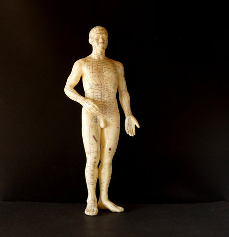 "Vintage Male Acupuncture Model / Medical Model, 19-1/2"" tall (c.1970s) N1 - ThirdShiftVintage.com"
