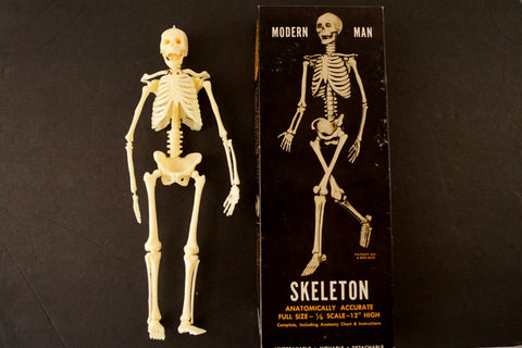 Vintage Human Skeleton Anatomy Model in Original Box, 1/6 scale Modern Man (c.1960s)