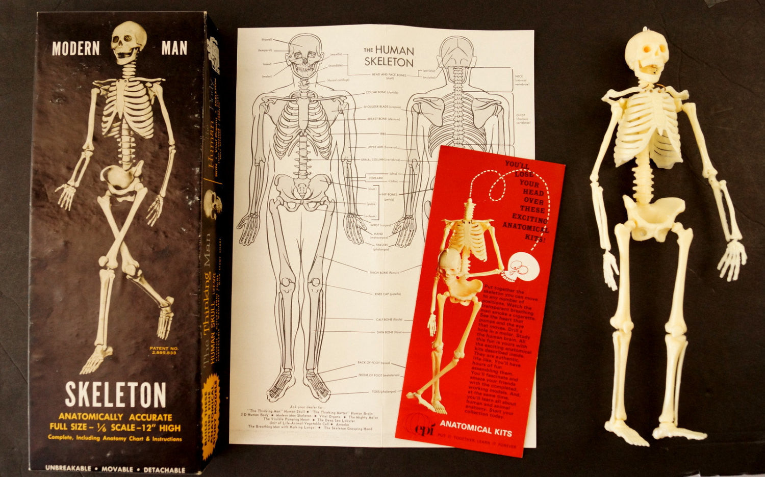 vintage human skeleton anatomy model in original box, 1/6 scale, Skeleton