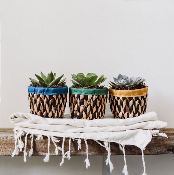 Colorful Woven Basket Succulent Planter