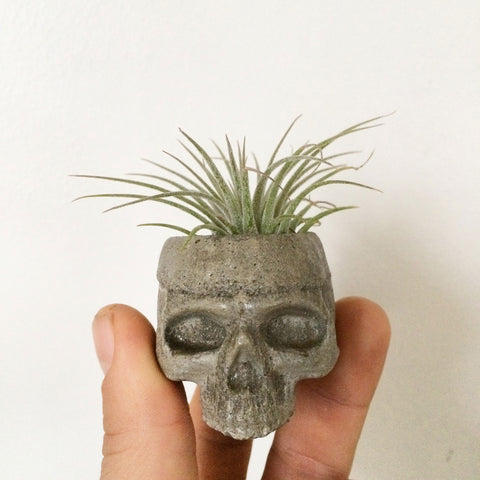Mini Concrete Skull Planter