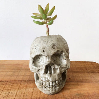 Concrete Skull Planter
