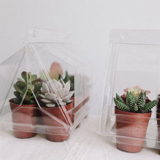 Mini Succulents Assorted Greenhouse Party Favors Wedding Favors