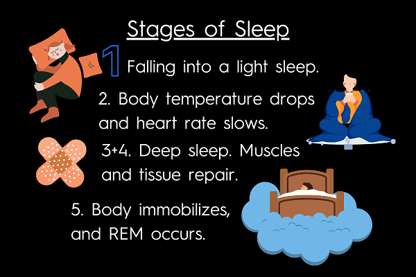 Five stages of sleep