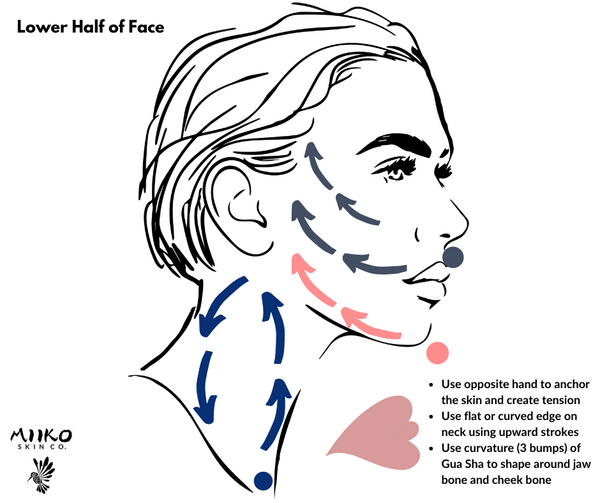 gua sha how to use - lower half of your face