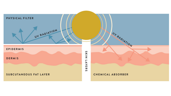graphic image of chemical vs physical sunscreen from Miiko Safe Summer Skin Guidebook