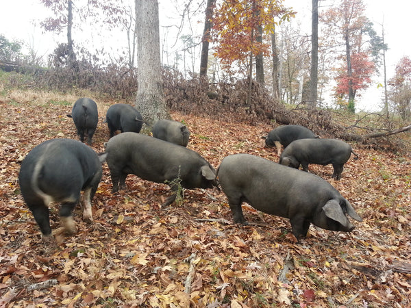 Whole Forest Raised Pastured Pig (deposit)
