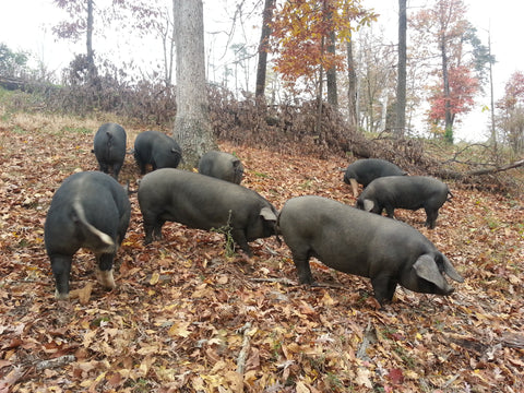 Half Forest Raised Pastured Pig (deposit)