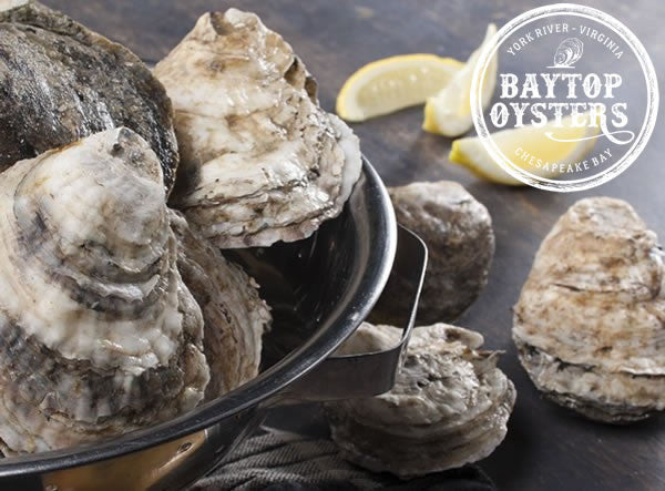 Baytop Shell Oysters