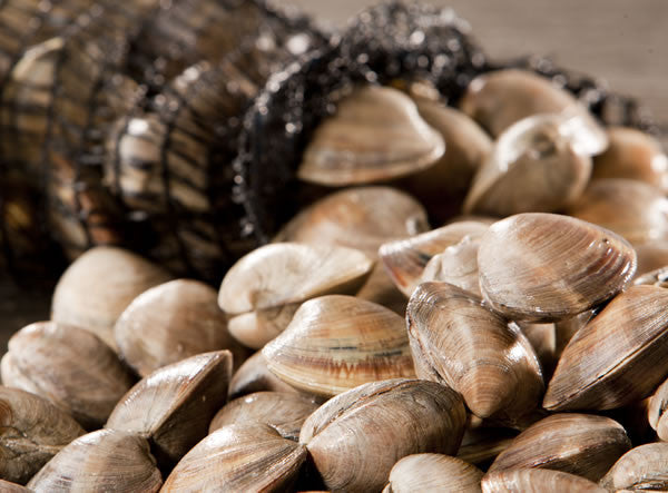 Littleneck Clams - Crabville