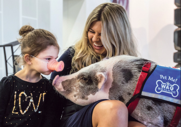The Special Bond Between Humans and Therapy Animals