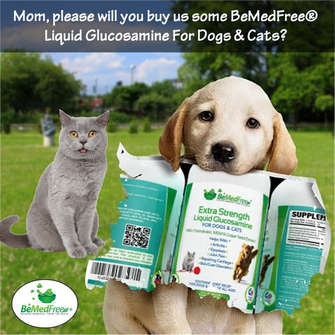 BeMedFree® Liquid Glucosamine For Dogs, Cats, And Other Pets