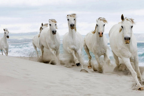 Beautiful Imagery - Horses Running Free - Silk Poster Artwork - 4 Sizes Available