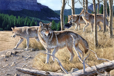 Beautiful Wild Wolves – Silk Poster Artwork – 4 Sizes Available