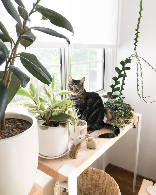 Cindy Zell of WKNDLA Cat on a plant shelf