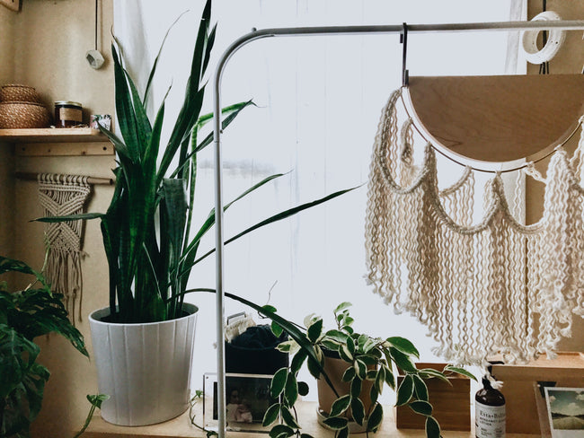 Snake plant in white pot with macrame
