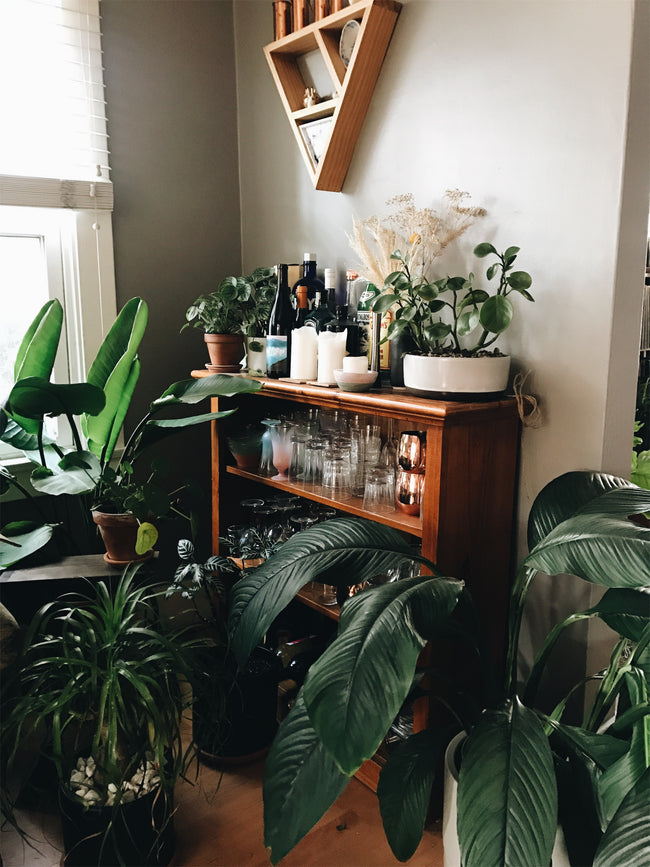 Urban Jungle Plant Corner