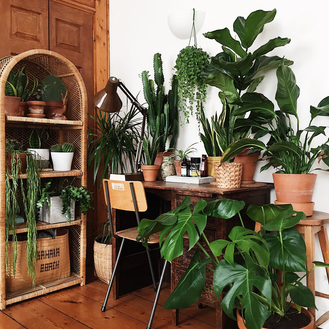 Kate Chilver desk covered in plants