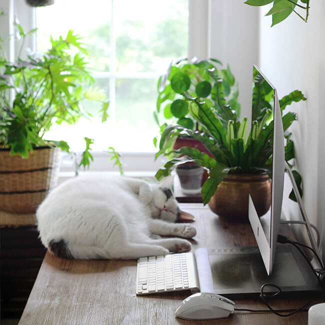 Jeannie Phan Plant Lady Of The Week Cat On Desk