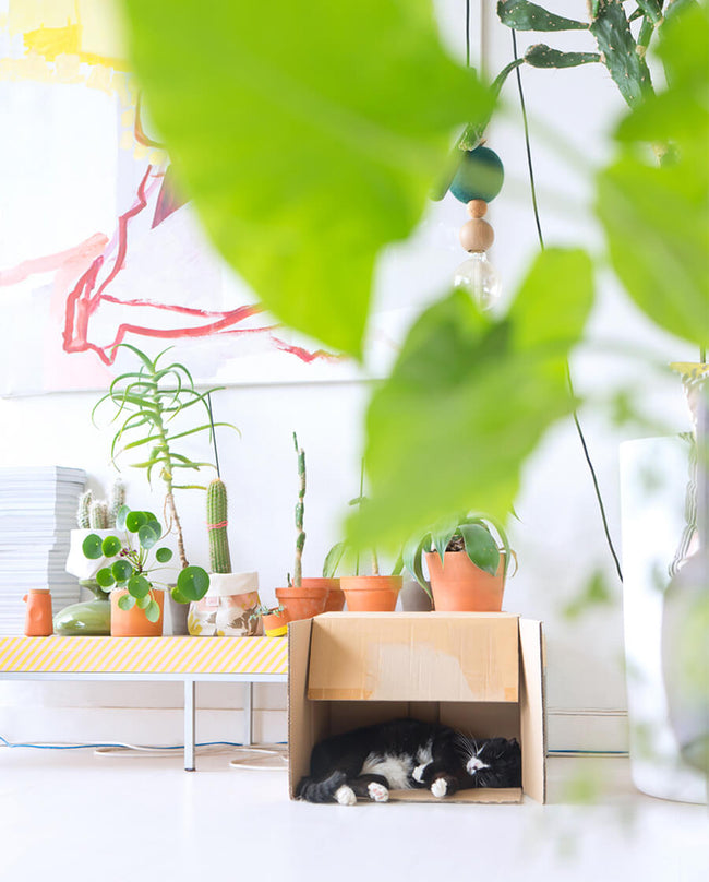 Judith De Graaff of Urban Jungle Bloggers Plants in Living Room