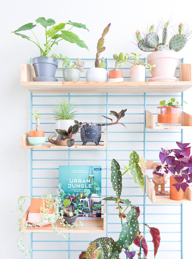 Judith De Graaff of Urban Jungle Bloggers Plant Shelf