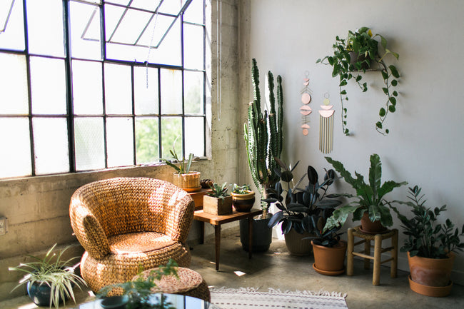 a beautiful collection of house plants