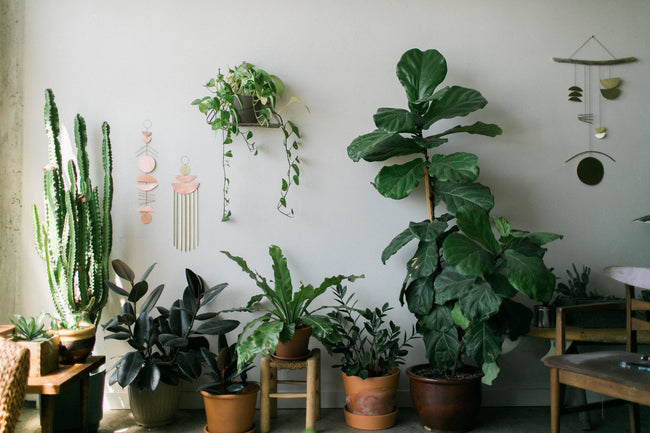 A collection of house plants