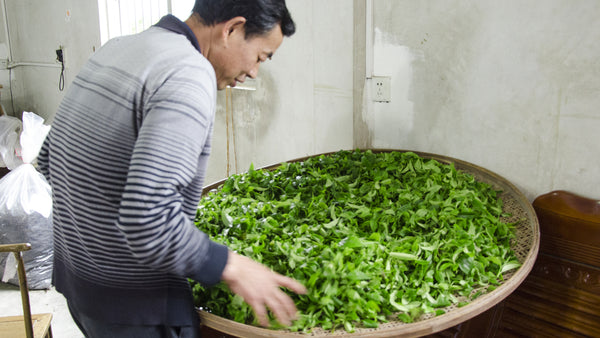Mr. Lin tea producer