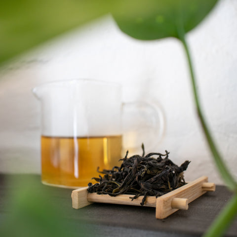 New Season Phoenix Dancong Oolong Tasting