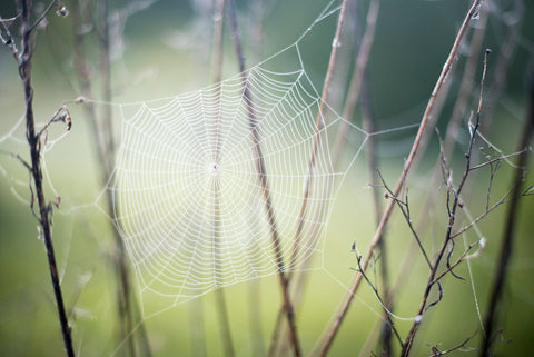 Dreamers and Drifters blog spiderweb