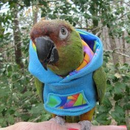 Avian Fashions Hoodie - Peacock-PARROTBOX PET SUPPLIES