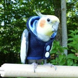 Avian Fashions Hoodie - Blue Jean-PARROTBOX PET SUPPLIES