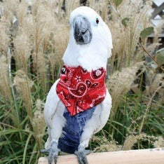 Avian Fashions Bandana - Red Paisley-PARROTBOX PET SUPPLIES