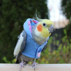 Avian Fashions Hoodie - Monet-PARROTBOX PET SUPPLIES