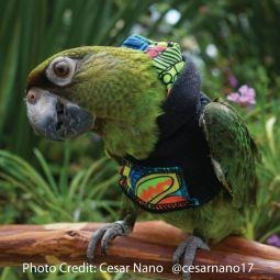 Avian Fashions Hoodie - Zen Doodle-PARROTBOX PET SUPPLIES