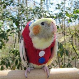 Avian Fashions Hoodie - Red Fireworks-PARROTBOX PET SUPPLIES