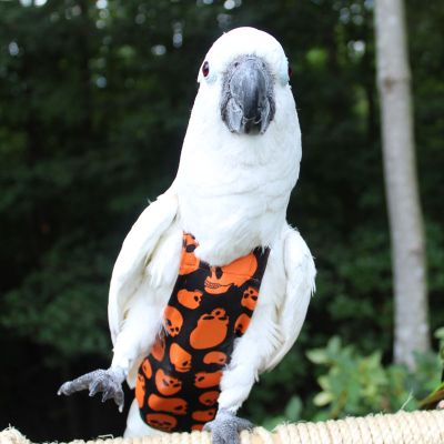 Avian Fashions Flight Suit - Scary Skulls-PARROTBOX PET SUPPLIES