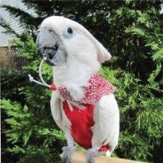 Avian Fashions Bandana - Sweet Heart-PARROTBOX PET SUPPLIES
