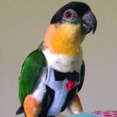 Avian Fashions Flight Suit - Tux with Tails-PARROTBOX PET SUPPLIES