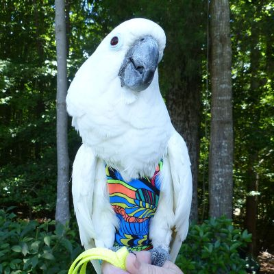 Avian Fashions Flight Suit - Zen Doodle-PARROTBOX PET SUPPLIES