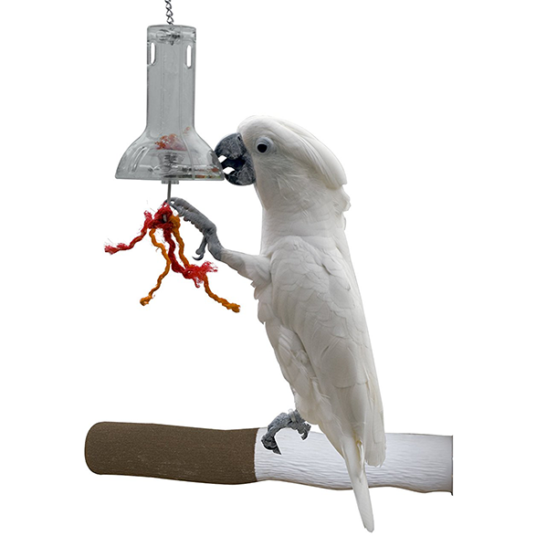 Creative foraging capsule for parrots, parrotbox pet supplies