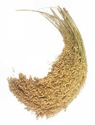 Millet French White 200 GM